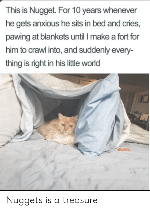 nugget: This is Nugget. For 10 years whenever  he gets anxious he sits in bed and cries,  pawing at blankets until I make a fort for  him to crawl into, and suddenly every-  thing is right in his little world Nuggets is a treasure