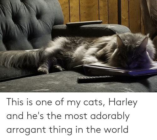 Most Adorably: This is one of my cats, Harley and he's the most adorably arrogant thing in the world