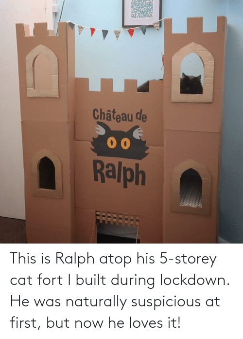 naturally: This is Ralph atop his 5-storey cat fort I built during lockdown. He was naturally suspicious at first, but now he loves it!