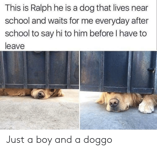 School, Boy, and Doggo: This is Ralph he is a dog that lives near  school and waits for me everyday after  school to say hi to him before I have to  leave Just a boy and a doggo