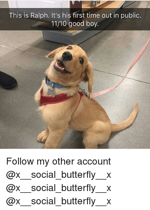 Publicated: This is Ralph. It's his first time out in public.  11/10 good boy. Follow my other account @x__social_butterfly__x @x__social_butterfly__x @x__social_butterfly__x
