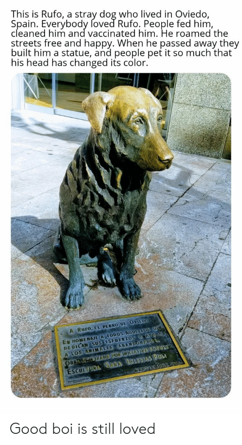 Spain: This is Rufo, a stray dog who lived in Oviedo,  Spain. Everybody foved Rufo. People fed him,  cleaned him and vaccinated him. He roamed the  streets free and happy. When he passed away they  built him a statue, and people pet it so much that  his head has changed its color.  A RUFO, EL PERRO DE OVIEDO  EN HOMENAJE A TODOS AQUELLOS OUG  DEDICAN SUS ESFUERZOS AAYUDA  A LOS ANIMALES ABANDONAPOS  ESCULTORA SARA IGLESIAS POL  SEPTEDBREV01  OBRA K KIZDAPOR INIEATVA POPULAR Good boi is still loved