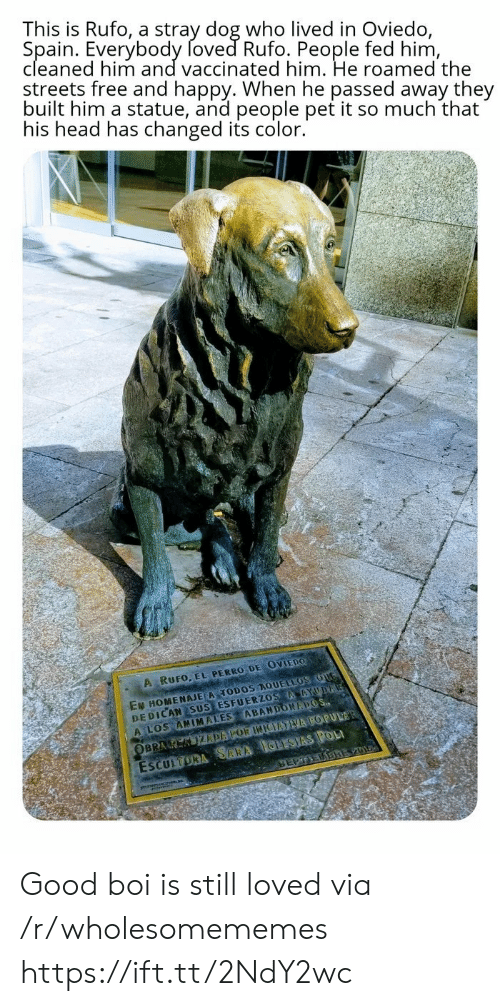 Spain: This is Rufo, a stray dog who lived in Oviedo,  Spain. Everybody foved Rufo. People fed him,  cleaned him and vaccinated him. He roamed the  streets free and happy. When he passed away they  built him a statue, and people pet it so much that  his head has changed its color.  A RUFO, EL PERRO DE OVIEDO  EN HOMENAJE A TODOS AQUELLOS OUG  DEDICAN SUS ESFUERZOS AAYUDA  A LOS ANIMALES ABANDONAPOS  ESCULTORA SARA IGLESIAS POL  SEPTEDBREV01  OBRA K KIZDAPOR INIEATVA POPULAR Good boi is still loved via /r/wholesomememes https://ift.tt/2NdY2wc