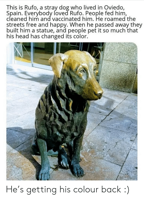 Spain: This is Rufo, a stray dog who lived in Oviedo,  Spain. Everybody foved Rufo. People fed him,  cleaned him and vaccinated him. He roamed the  streets free and happy. When he passed away they  built him a statue, and people pet it so much that  his head has changed its color. He's getting his colour back :)