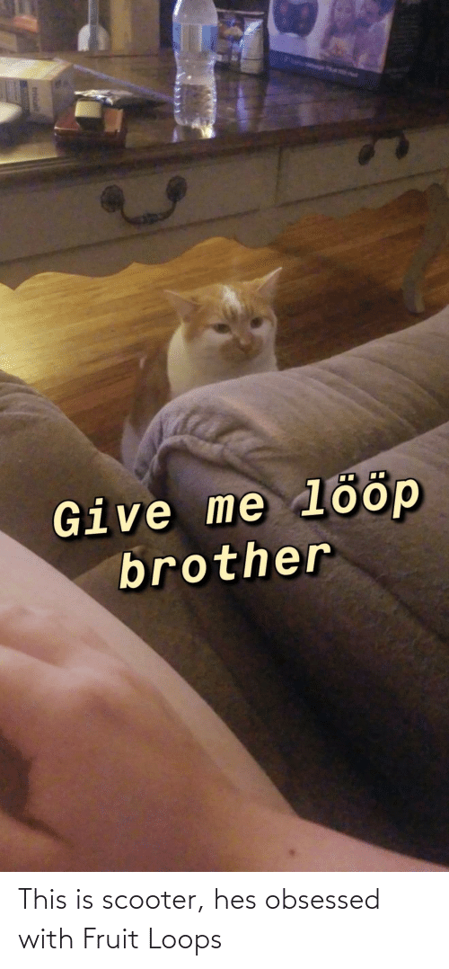 loops: This is scooter, hes obsessed with Fruit Loops