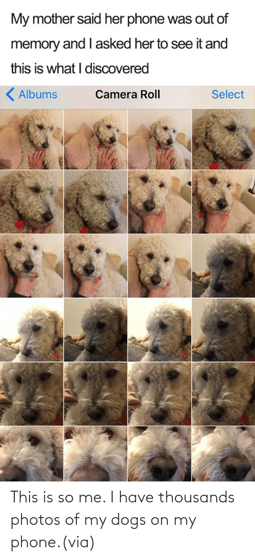 Me I: This is so me. I have thousands photos of my dogs on my phone.(via)