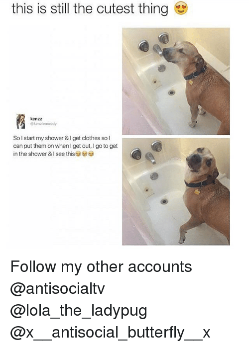 lolas: this is still the cutest thing  ps  kenzz  @kenziemoody  Sol start my shower & I get clothes so l  can put them on when I get out, I go to get  in the shower & I see this as to Follow my other accounts @antisocialtv @lola_the_ladypug @x__antisocial_butterfly__x