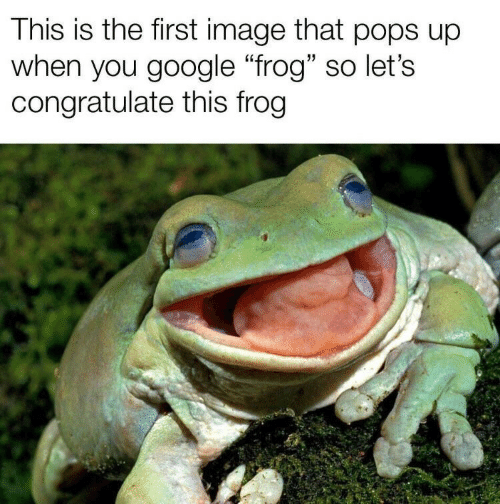 """Google, Image, and Frog: This is the first image that pops up  when you google """"frog"""" so let's  congratulate this frog"""