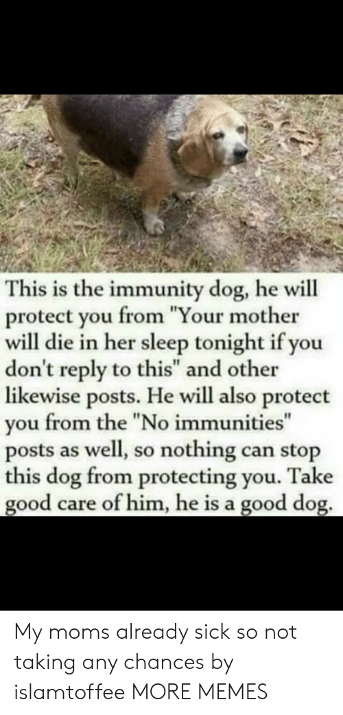 "Dank, Memes, and Moms: This is the immunity dog, he will  protect you from ""Your mother  will die in her sleep tonight if you  don't reply to this"" and other  likewise posts. He will also protect  you from the ""No immunities""  posts as well, so nothing can stop  this dog from protecting you. Take  good care of him, he is a good dog. My moms already sick so not taking any chances by islamtoffee MORE MEMES"