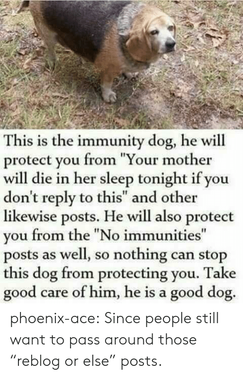 "Tumblr, Blog, and Good: This is the immunity dog, he will  protect you from ""Your mother  will die in her sleep tonight if you  don't reply to this"" and other  likewise posts. He will also protect  you from the ""No immunities""  posts as well, so nothing can stop  this dog from protecting you. Take  good  care of him, he is a good dog. phoenix-ace:  Since people still want to pass around those ""reblog or else"" posts."