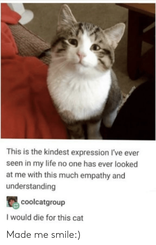 Empathy: This is the kindest expression I've ever  seen in my life no one has ever looked  at me with this much empathy and  understanding  coolcatgroup  I would die for this cat Made me smile:)