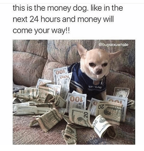 Memes, Money, and 🤖: this is the money dog. like in the  next 24 hours and money will  come your way!!  xuwhale  0o  OOL  0Z