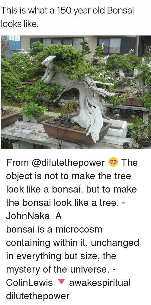 bonsai: This is what a 150 year old Bonsai  looks like From @dilutethepower 😊 The object is not to make the tree look like a bonsai, but to make the bonsai look like a tree. - JohnNaka⠀⠀⠀⠀⠀⠀⠀ ⠀⠀⠀⠀⠀⠀⠀⠀⠀⠀⠀⠀⠀⠀⠀⠀⠀⠀⠀⠀ A bonsai is a microcosm containing within it, unchanged in everything but size, the mystery of the universe. - ColinLewis 🔻 awakespiritual dilutethepower