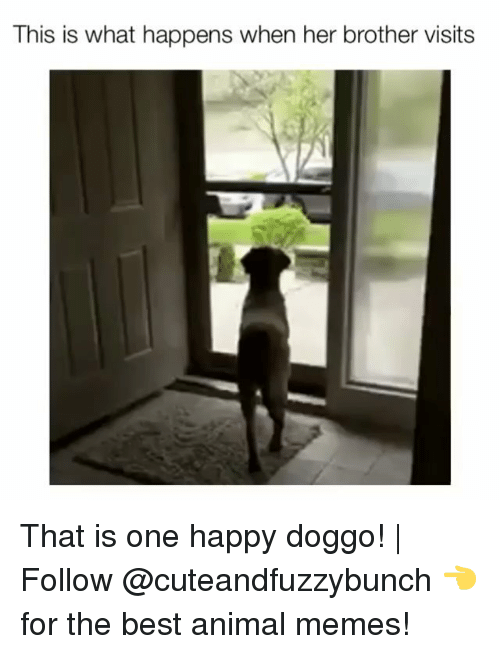 Best Animal Memes: This is what happens when her brother visits That is one happy doggo! | Follow @cuteandfuzzybunch 👈 for the best animal memes!