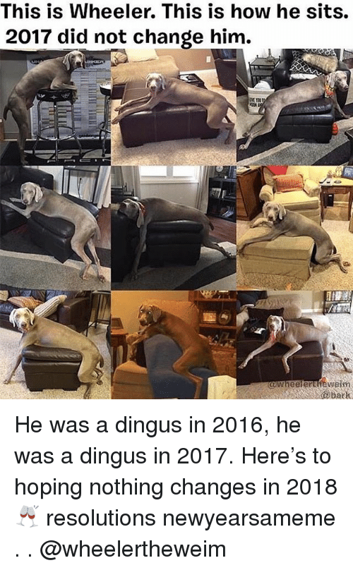 Memes, Change, and 🤖: This is Wheeler. This is how he sits.  2017 did not change him.  awheelerthewesm  abatk He was a dingus in 2016, he was a dingus in 2017. Here's to hoping nothing changes in 2018 🥂 resolutions newyearsameme . . @wheelertheweim
