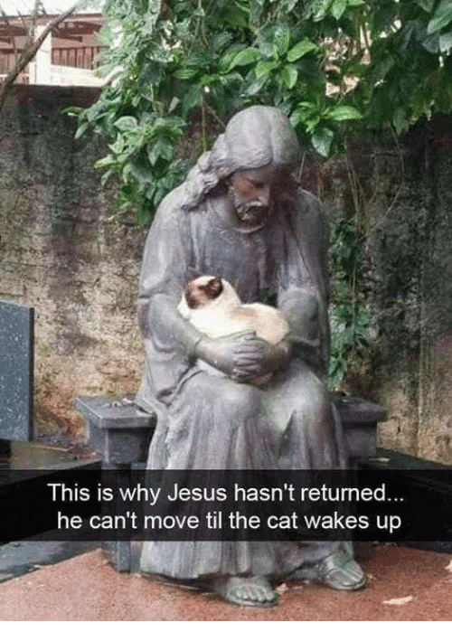 Jesus, Memes, and 🤖: This is why Jesus hasn't returned.  he can't move til the cat wakes up