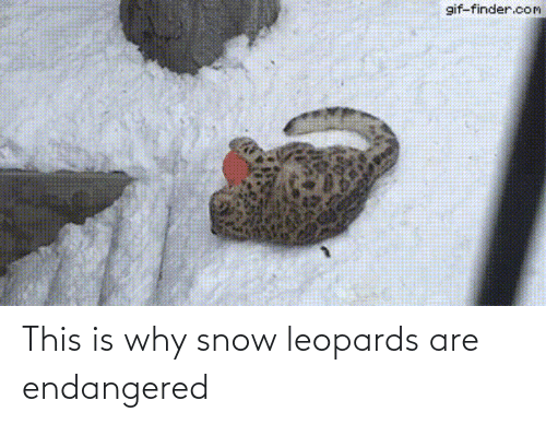 This Is Why: This is why snow leopards are endangered