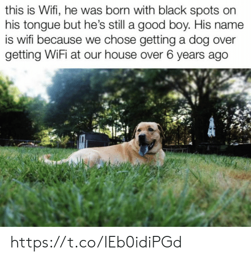 Memes, Black, and Good: this is Wifi, he was born with black spots on  his tongue but he's still a good boy. His name  is wifi because we chose getting a dog over  getting WiFi at our house over 6 years ago https://t.co/IEb0idiPGd