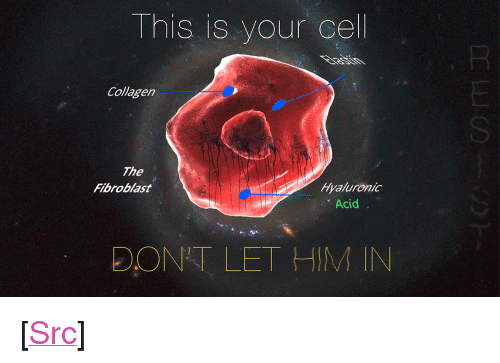 """Cel: This is your cel  Collagen  SI  The  Fibroblast  Hyaluronic  Acid  DONT LET HIM IN <p>[<a href=""""https://www.reddit.com/r/surrealmemes/comments/8bkf7u/this_is_your_last_refuge/"""">Src</a>]</p>"""