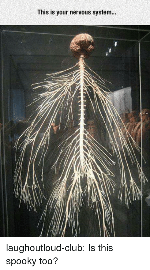 nervous system: This is your nervous system laughoutloud-club:  Is this spooky too?