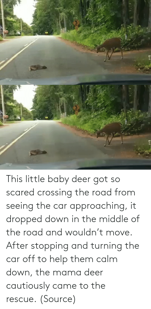 Deer: This little baby deer got so scared crossing the road from seeing the car approaching, it dropped down in the middle of the road and wouldn't move. After stopping and turning the car off to help them calm down, the mama deer cautiously came to the rescue. (Source)