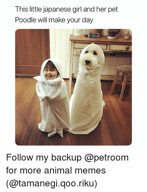 poodle: This little japanese girl and her pet  Poodle will make your day Follow my backup @petroom for more animal memes (@tamanegi.qoo.riku)