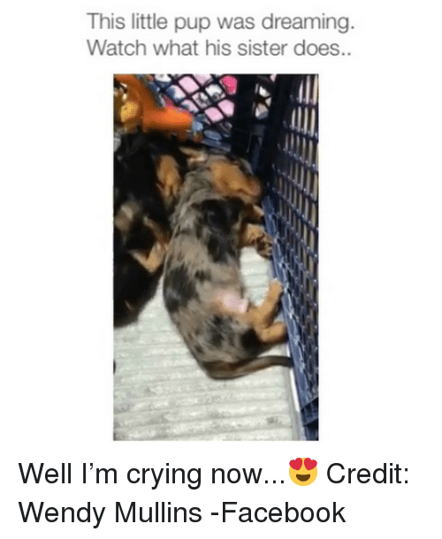 Crying, Facebook, and Memes: This little pup was dreaming  Watch what his sister does.. Well I'm crying now...😍 Credit: Wendy Mullins -Facebook