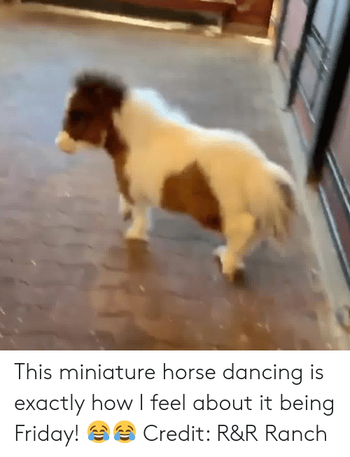 Dancing, Friday, and Horse: This miniature horse dancing is exactly how I feel about it being Friday! 😂😂 Credit: R&R Ranch