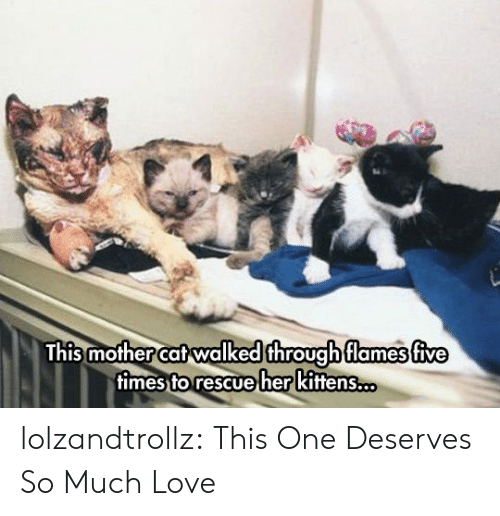 Love, Tumblr, and Blog: This mother cat walked through flames five  fimes to rescue her kittens.. lolzandtrollz:  This One Deserves So Much Love