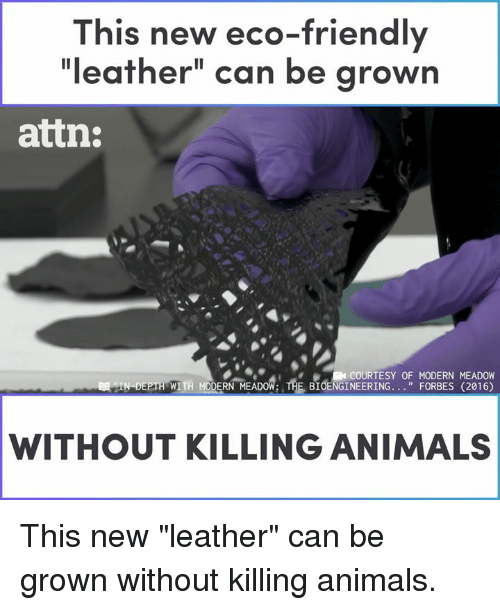 """Animals, Memes, and Forbes: This new eco-friendly  """"leather"""" can be grown  attn:  COURTESY OF MODERN MEADOW  WITH MODERN MEADOW: THE BIOENGINEERING. . """"FORBES (2016)  WITHOUT KILLING ANIMALS This new """"leather"""" can be grown without killing animals."""