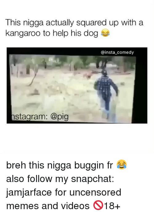 Insta Comedy: This nigga actually squared up with a  kangaroo to help his dog  insta comedy  stagram: @pig breh this nigga buggin fr 😂 also follow my snapchat: jamjarface for uncensored memes and videos 🚫18+