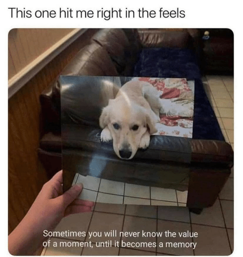 the feels: This one hit me right in the feels  Sometimes you will never know the value  of a moment, until it becomes a memory