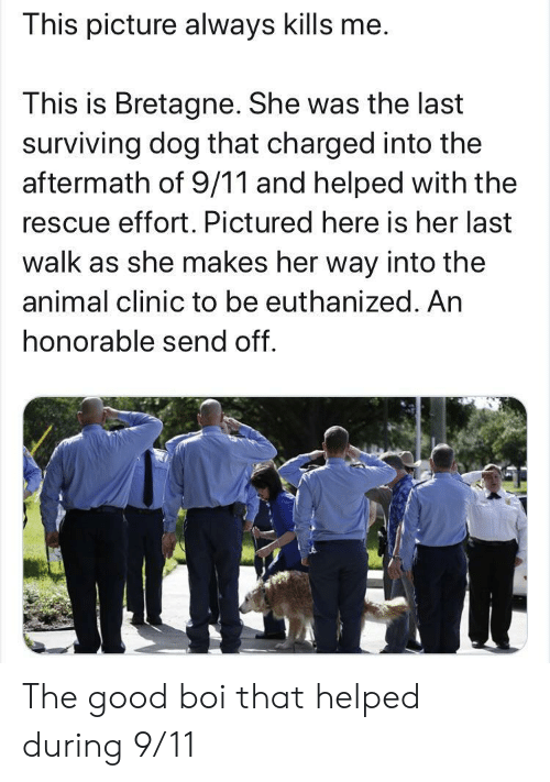 surviving: This picture always kills me.  This is Bretagne. She was the last  surviving dog that charged into the  aftermath of 9/11 and helped with the  rescue effort. Pictured here is her last  walk as she makes her way into the  animal clinic to be euthanized. An  honorable send off. The good boi that helped during 9/11