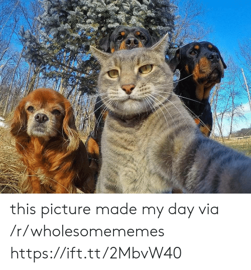 Via, Day, and Picture: this picture made my day via /r/wholesomememes https://ift.tt/2MbvW40