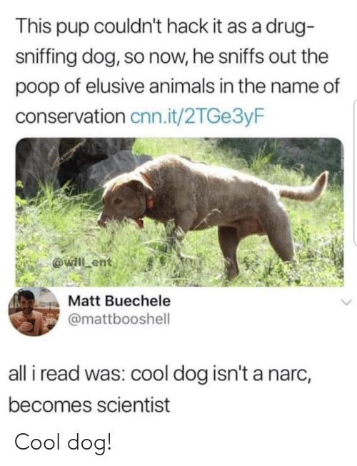 Animals, cnn.com, and Poop: This pup couldn't hack it as a drug-  sniffing dog, so now, he sniffs out the  poop of elusive animals in the name of  conservation cnn.it/2TGe3yF  Matt Buechele  @mattbooshell  all i read was: cool dog isn't a narc,  becomes scientist Cool dog!