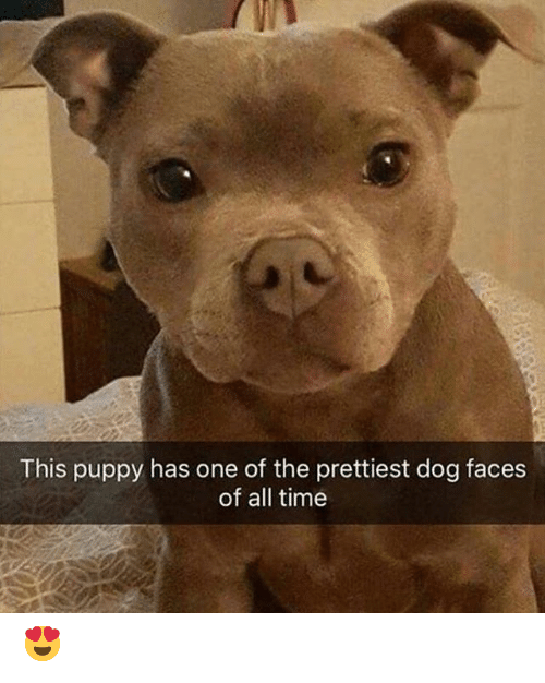 Memes, Puppy, and Time: This puppy has one of the prettiest dog faces  of all time 😍