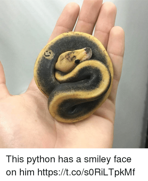 smiley face: This python has a smiley face on him https://t.co/s0RiLTpkMf