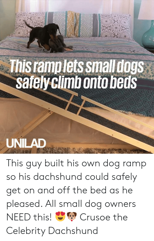 beds: This ramplets smalldogs  safelyclimbonto beds  UNILAD This guy built his own dog ramp so his dachshund could safely get on and off the bed as he pleased. All small dog owners NEED this! 😍🐶  Crusoe the Celebrity Dachshund