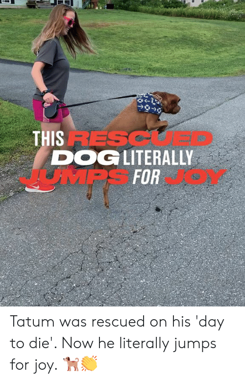 Dank, 🤖, and Joy: THIS RESC  DOGLITERALLY  JMPS FOR Tatum was rescued on his 'day to die'. Now he literally jumps for joy. 🐕👏