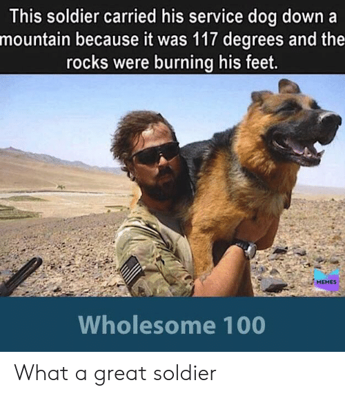 Memes Wholesome: This soldier carried his service dog down a  mountain because it was 117 degrees and the  rocks were burning his feet.  MEMES  Wholesome 100 What a great soldier