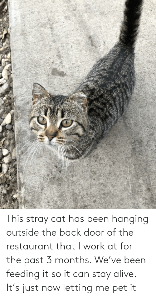 Restaurant: This stray cat has been hanging outside the back door of the restaurant that I work at for the past 3 months. We've been feeding it so it can stay alive. It's just now letting me pet it