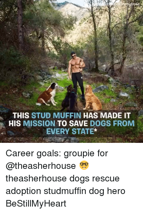 Dogs, Goals, and Memes: THIS STUD MUFFIN HAS MADE IT  HIS MISSION TO SAVE DOGS FROM  EVERY STATE* Career goals: groupie for @theasherhouse 🤓 theasherhouse dogs rescue adoption studmuffin dog hero BeStillMyHeart