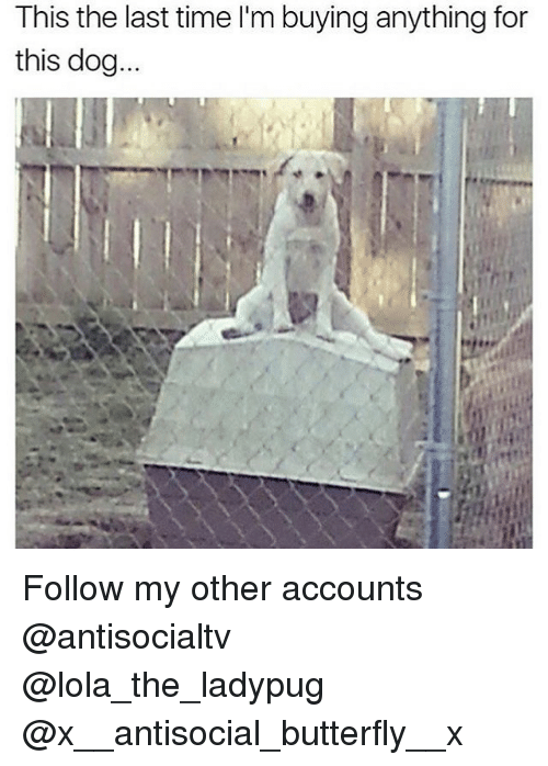 lolas: This the last time I'm buying anything for  this dog... Follow my other accounts @antisocialtv @lola_the_ladypug @x__antisocial_butterfly__x