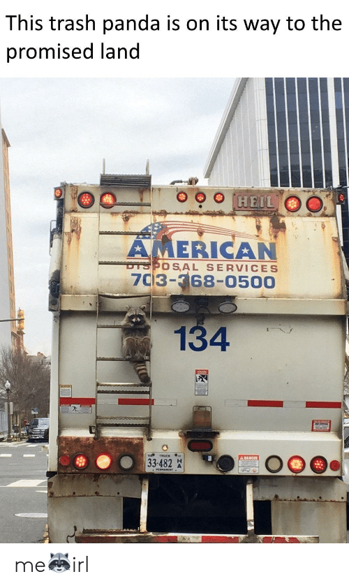Trash, Panda, and American: This trash panda is on its way to the  promised land  HEIL  AMERICAN  DTSPOS AL SERVICES  7C3-368-0500  134  A DANGER  33-482 me🦝irl