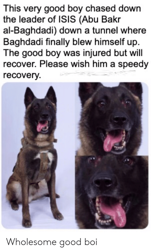 abu: This very good boy chased down  the leader of ISIS (Abu Bakr  al-Baghdadi) down a tunnel where  Baghdadi finally blew himself up  The good boy was injured but will  recover. Please wish him a speedy  recovery Wholesome good boi