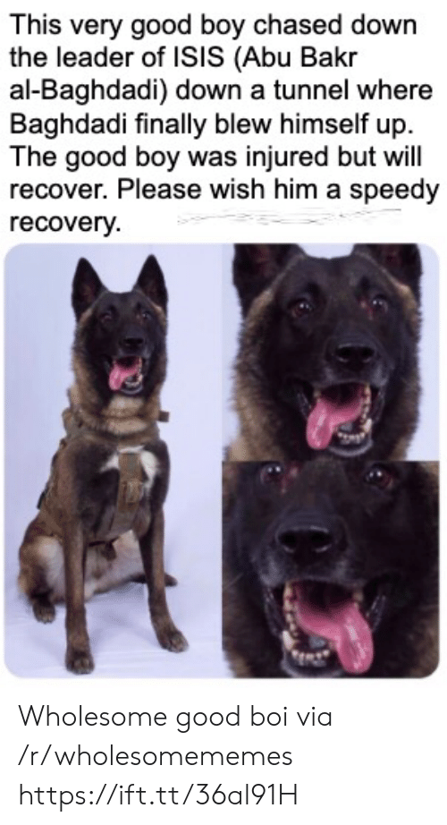 abu: This very good boy chased down  the leader of ISIS (Abu Bakr  al-Baghdadi) down a tunnel where  Baghdadi finally blew himself up  The good boy was injured but will  recover. Please wish him a speedy  recovery Wholesome good boi via /r/wholesomememes https://ift.tt/36al91H