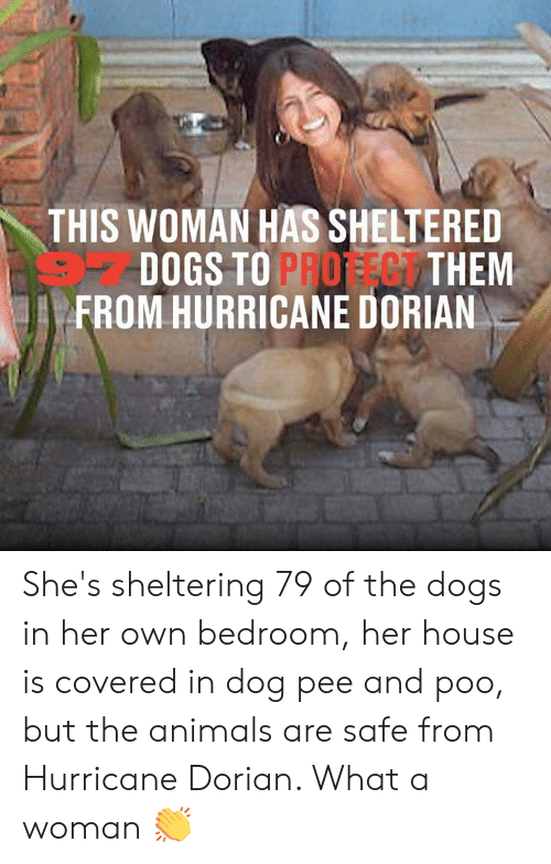 poo: THIS WOMAN HAS SHELTERED  DOGS TO PROFEG THEM  FROM HURRICANE DORIAN She's sheltering 79 of the dogs in her own bedroom, her house is covered in dog pee and poo, but the animals are safe from Hurricane Dorian. What a woman 👏