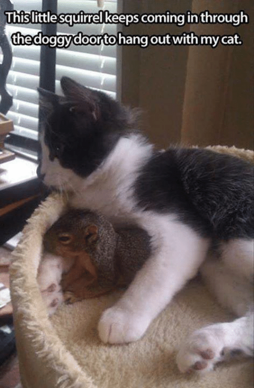 Memes, Squirrel, and 🤖: Thislittle squirrel keeps coming in through  thedogavdoorto hang out with my cat