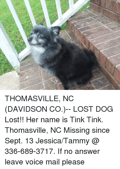 Tinke: THOMASVILLE, NC (DAVIDSON CO.)-- LOST DOG  Lost!! Her name is Tink Tink. Thomasville, NC Missing since Sept. 13 Jessica/Tammy @ 336-689-3717. If no answer leave voice mail please
