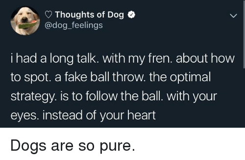 Dogs, Fake, and Heart: Thoughts of Dog  @dog_feelings  i had a long talk. with my fren. about how  to spot. a fake ball throw. the optimal  strategy. is to follow the ball. with your  eyes. instead of your heart Dogs are so pure.